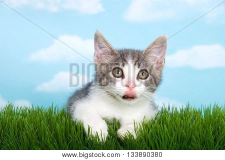 gray and white tabby kitten with tongue out laying on green grass blue background with white clouds