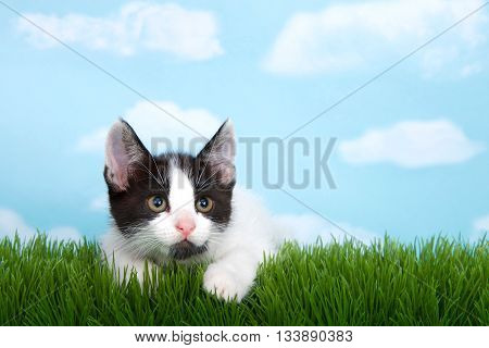 black and white tabby kitten laying on green grass blue background with white fluffy clouds