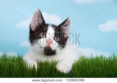 black and white tabby kitten on green grass blue background with white clouds