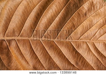 Close up Old brown leaf texture background .