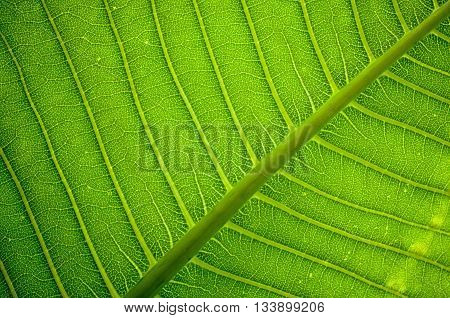 Fresh Green Leaf Texture Background