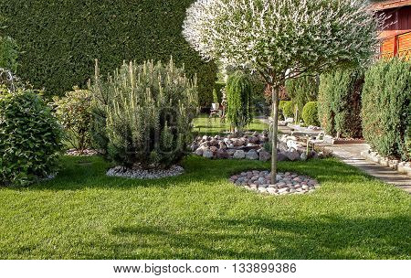 Decorative Tree In Garden