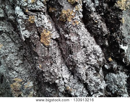 Natural texture of the bark of a tree in spring.