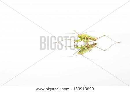 an green mantis crawling over a reflection title