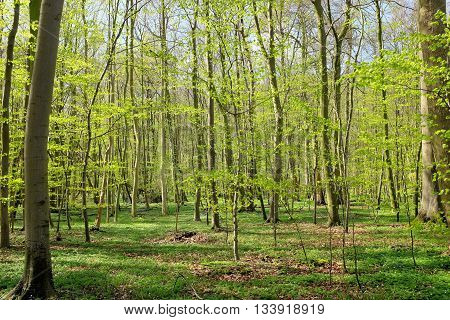 Beautiful forrest in the morning sun in spring