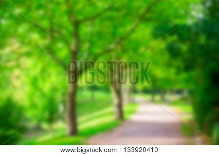 Abstract blur city park with green tree, bokeh background