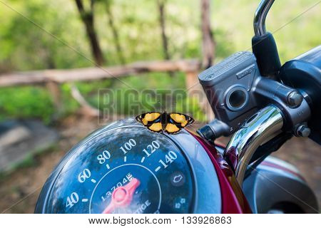Yellow Pansy (Junonia hierta) Butterfly on the motorcycle