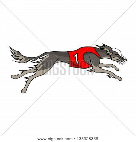 Running dog saluki breed, in dog racing or coursing dress number one