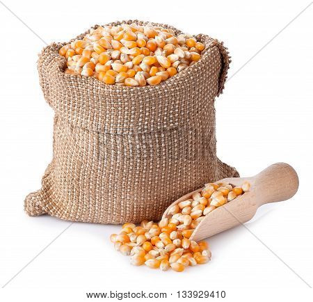 corn grains in bag with wooden scoop isolated on white background. Corn seeds in sack. Dry uncooked corn grains for popcorn