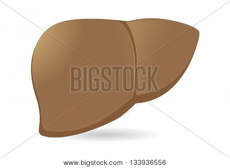 Human liver vector. human internal organ isolated on white background.