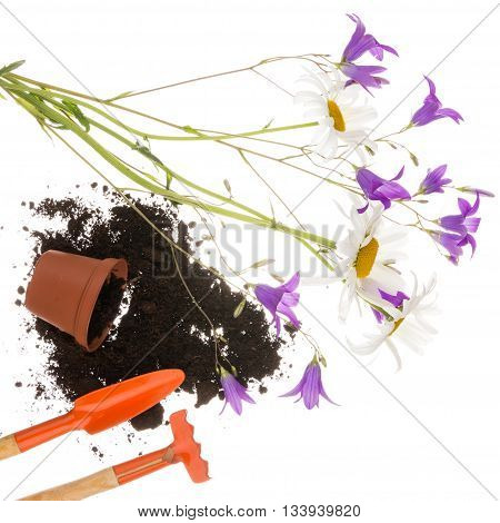 Garden still life with a shovel a pitchfork a plastic with brown goroshokom of scattered black fertile soil and flowers field of daisies and purple bell isolated on a white background in the square