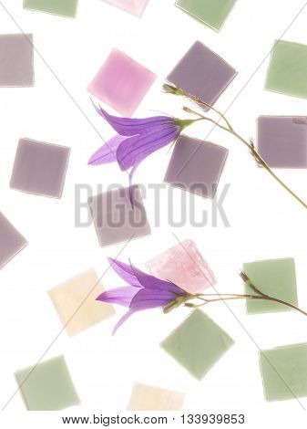 beautiful pearl pink purple and green glass mosaic with light blurred stripes and delicate flowers of lilac-purple bells similar in color to the mosaic on a white background isolation