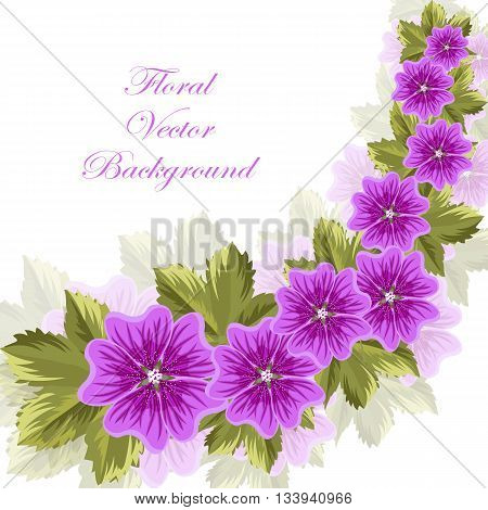 Beautiful mallow flowers with leaves isolated on white background.