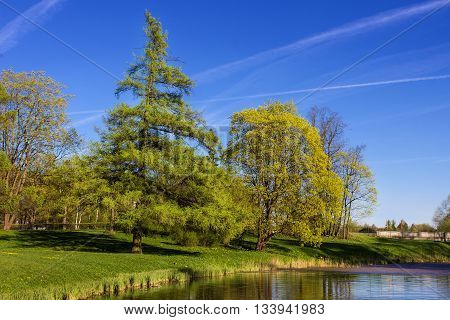Spring landscape with a spruce and a lake. Gatchina park. Saint Petersburg. Russia.