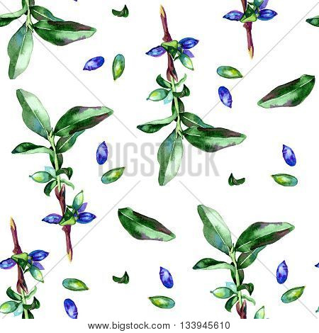 Watercolor honeysuckle berries illustration pattern on white background