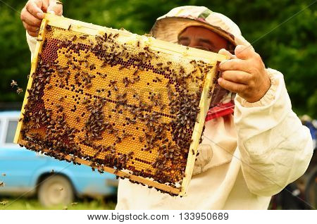 Beekeeper holding frame of honeycomb with working bees outdoor