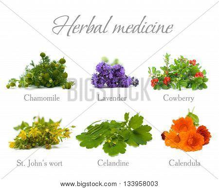 Herbal Medicine: chamomile lavender calendula celandine and St. John's wort isolated