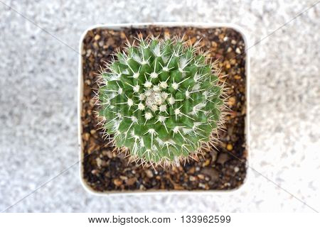 top view of green cactus in flowerpot isolated