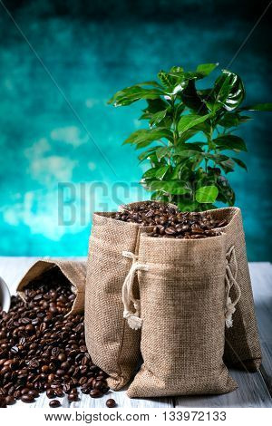 Ground Coffee With Coffe Plants