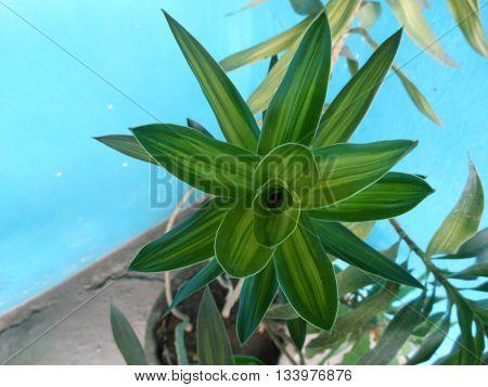 planta venezolana indigenas culturalmente exotica jardin conuco fondo