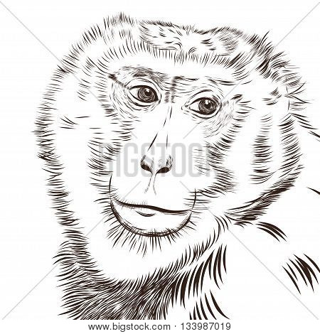 Chimpanzee drawing vector. Animal artistic drawing, use for your design. EPS