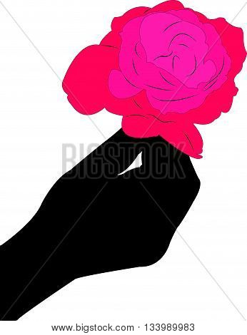 Rose for you, invitation card, illustration vector design.