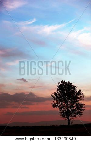 beautiful landscape with lonely tree