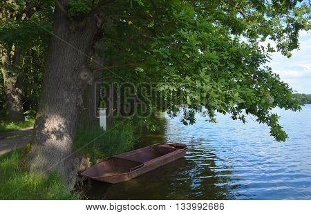 Pond in south Bohemia with oak trees