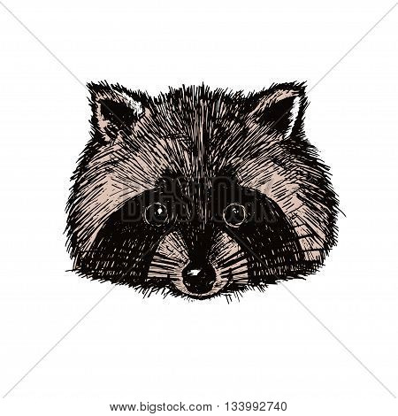Concept Hand Drawn Cute Raccoon. Vector Illustration. Design Template For Greeting Cards Etc.
