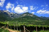 image of south tyrol  - South Tyrol vine road view on the Alps and vineyards - JPG
