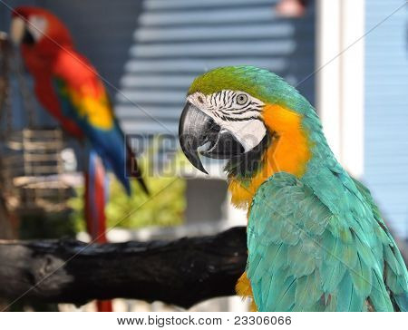 Macaw or parrot with yellow and green feathers