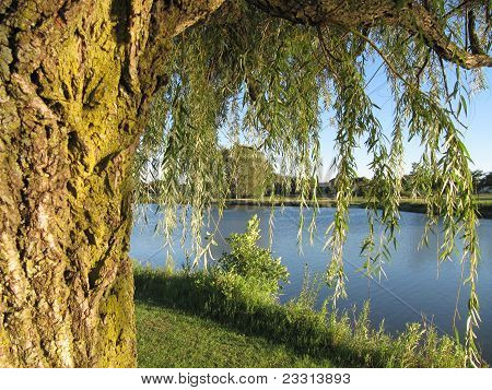 Trees with full summer growth and Bode Lake in Distance