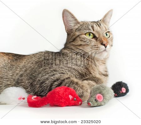 Lying Grey Cat With Toy Mice