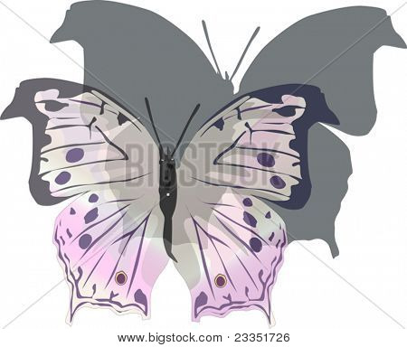illustration with pink butterfly and shadow isolated on white background