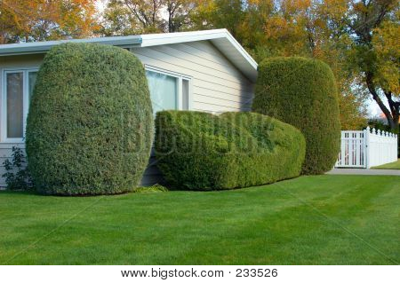 Neatly Trimmed Shrubs 2