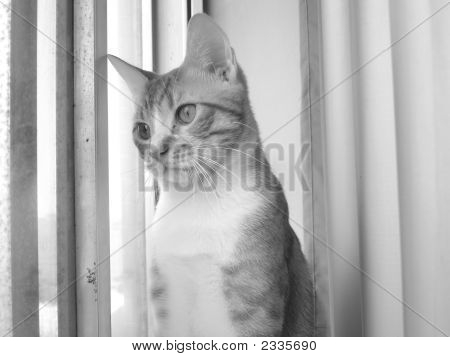 Polite Cat