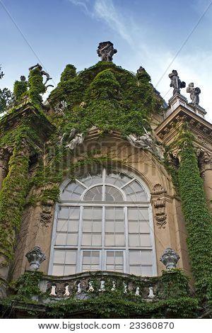 Ivy Window