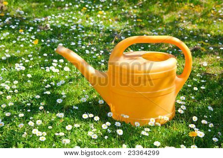 Green Watering Can On A Field Of Daisies.