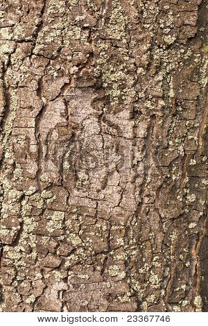 Bark Background Texture Pattern