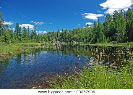 Marsh In The Quetico