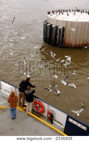 Feeding Seagulls 001
