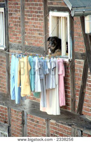 Laundry And Dog