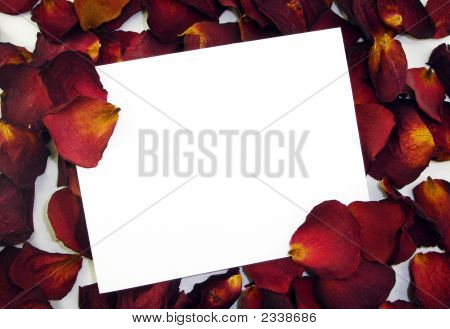 Blank Love Note On Red Rose Pedals