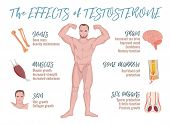 Testosterone Effects Infographic Image Isolated On A Light Blue Background. Male Sex Hormone And It  poster
