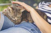 Cat Enjoying Cuddling poster
