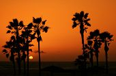 image of sunset beach  - sunset at venice beach - JPG
