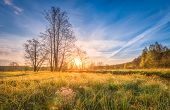 Natural Scenery Landscape On Meadow On Bright Sunrise On Spring Morning. Spring Grass, Trees And Blu poster