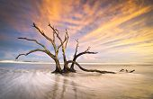 Folly Beach Dead Tree Driftwood oceano do sol Charleston Sc paisagem