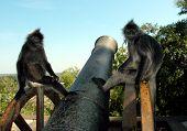 Monkeys Contemplating Life poster