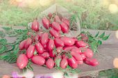 Pink Long Tomatoes In Canvas Bag. Fresh Long Tomato On A Wooden Table. poster